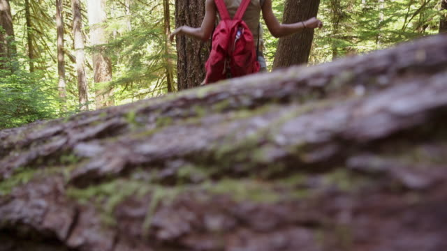 Tilt up shot of friends walking on tree trunk at mount hood national forest