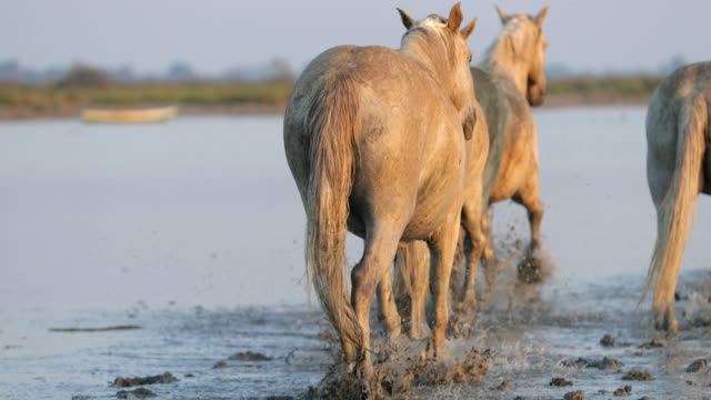tilt up shot of horses strolling in sea while splashing water on sunny day - camargue, france - cavalry stock videos & royalty-free footage