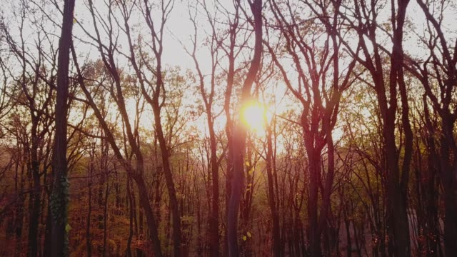 tilt up shot of magical forest back lit by a sunset - back lit video stock e b–roll