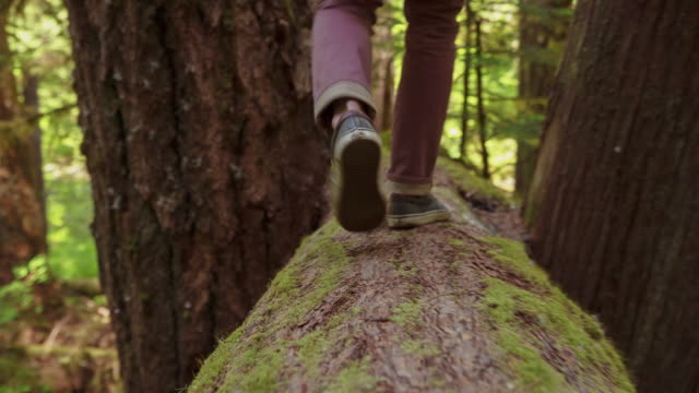 tilt up shot of man walking on tree trunk at mount hood national forest - tree trunk stock videos & royalty-free footage