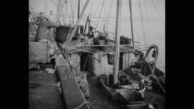 tilt up shot of men unloading fish from trawler - fisherman stock videos & royalty-free footage