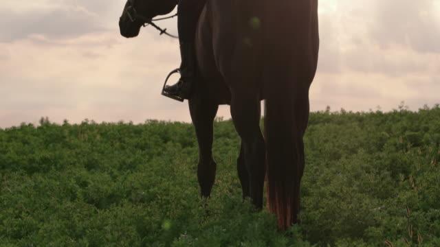 vídeos y material grabado en eventos de stock de tilt up shot of woman sitting on horse against sky - herbívoro