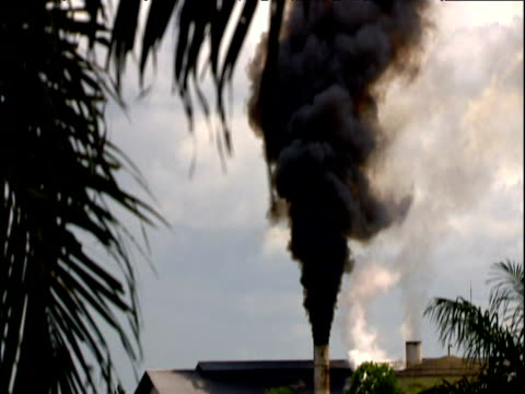 tilt up smoke plume above palm oil plantation in deforested area formerly covered in rainforest borneo - smoke physical structure stock videos & royalty-free footage