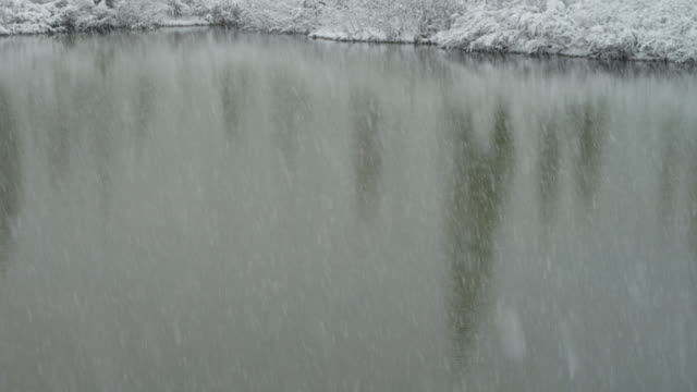 Tilt up, snow falls over forest pond