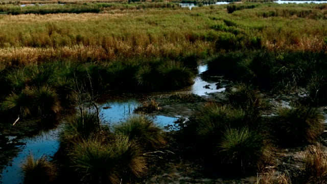 Tilt Up - Swamp