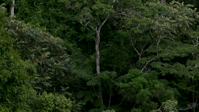 tilt up through forested hills in african rainforest - ghana stock videos & royalty-free footage