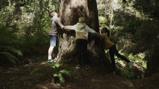 tilt up to children holding hands and hugging tree / muir woods, california, united states - tree hugging stock videos & royalty-free footage