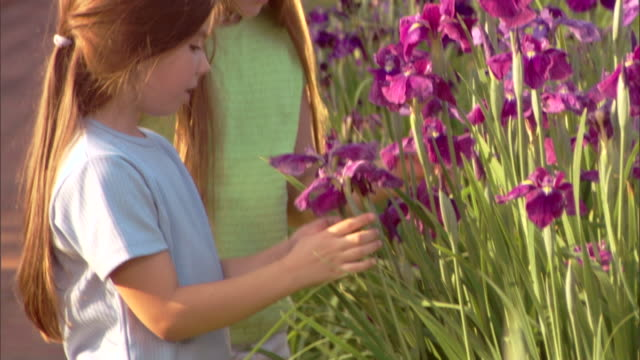 vídeos de stock, filmes e b-roll de tilt up to close-up of girls talking as they look at irises in a garden. - plano americano