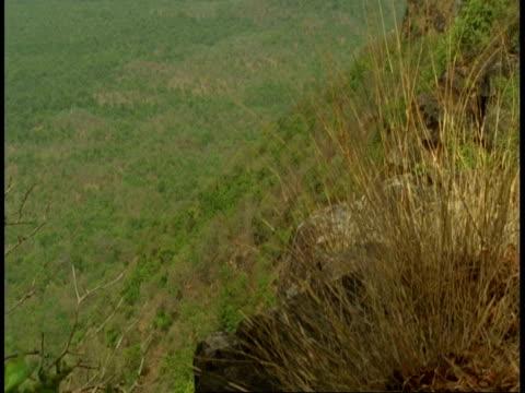 wa tilt up to mountain jungle, bandhavgarh national park, india - national icon stock videos & royalty-free footage