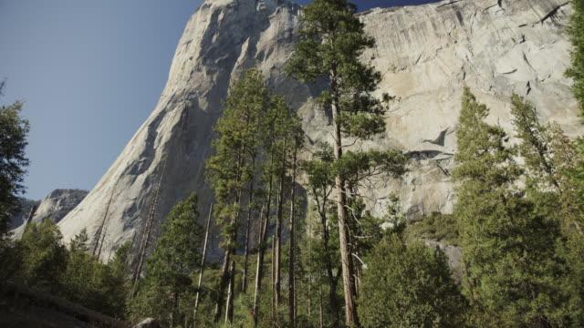 tilt up to scenic view of trees and el capitan / yosemite valley, california, united states - エルキャピタン点の映像素材/bロール