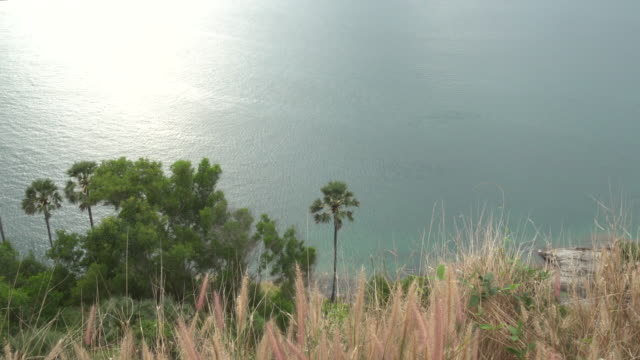 tilt up to sea view, green hillside in foreground - pct stock videos and b-roll footage