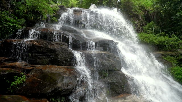 slo mo tilt up tropical waterfall and rain forest. - june stock videos & royalty-free footage