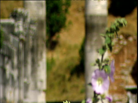 Tilt up two ancient columns hollyhock in foreground. Ancient town of Lydia Salis