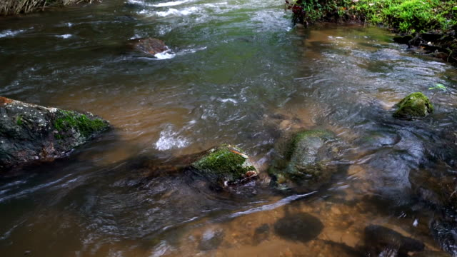tilt up water flowing in tropical rainforest. - june stock videos & royalty-free footage