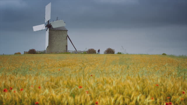 MS, Tilt up, Wind mill in a cereal field, flowers, cloudy sky