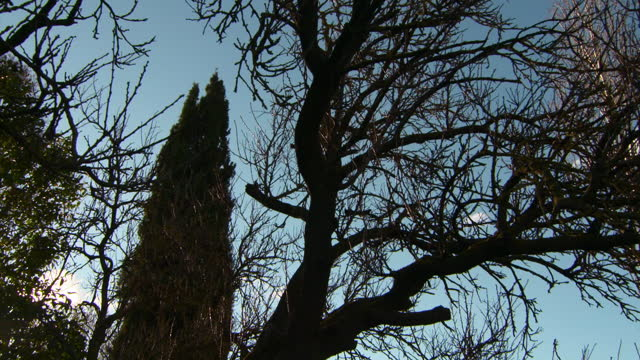 vidéos et rushes de tilt up: wind rustles branches of bare tree and towering cypress tree in golden evening sunlight - girona, spain - bare tree