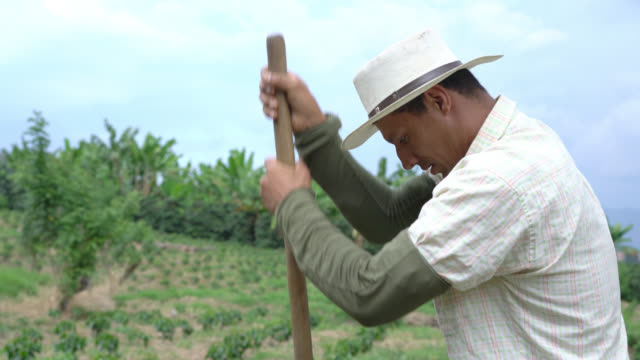 Tilt view of farmer digging a hole with a shovel to plant coffee