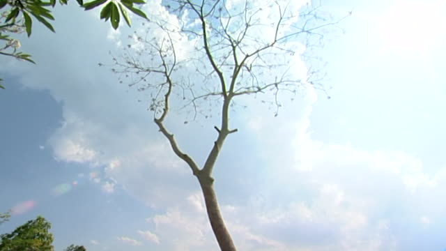 vídeos y material grabado en eventos de stock de tilt-down from a bare tree to cottages among dense foliage. - bare tree