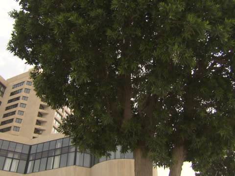 tiltdown from a tree to the buildings of the intercontinental hotel - poolside stock videos & royalty-free footage