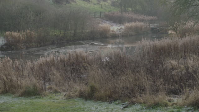 tilt-down shot of a pond with a wooden bridge in wharram percy - reed grass family stock videos & royalty-free footage