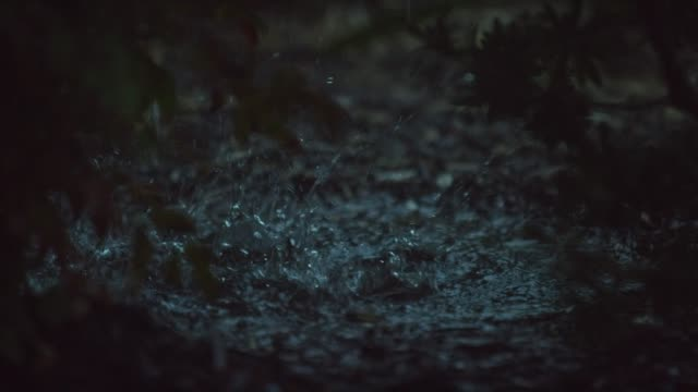 tilting down shot of raindrops falling past plants and splashing into a puddle - pioggia video stock e b–roll