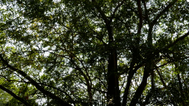 tilting shot of tree and sunlight in forests. - tropical tree stock videos & royalty-free footage