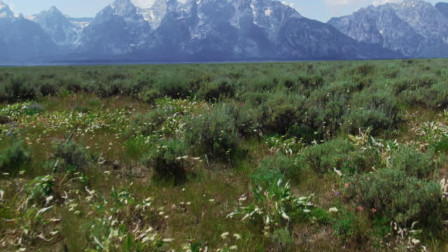 tilting up aerial drone shot of flying over a meadow (antelope flats) toward the grand tetons in western wyoming on a sunny day (grand teton national park) - parco nazionale del grand teton video stock e b–roll