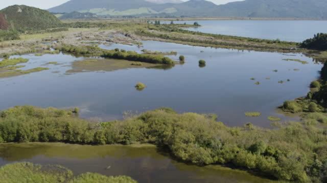 tilt-up shot from a lakeside swamp of motuoapa to mount pihanga - ngauruhoe stock videos & royalty-free footage