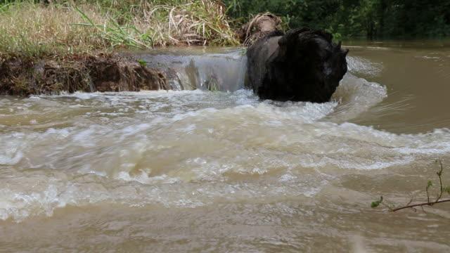 timber bulkheads waterway. - log stock videos & royalty-free footage