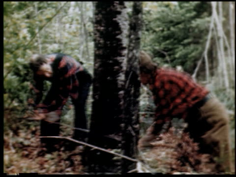 vidéos et rushes de [timber in the northeast] - 6 of 23 - bûcheron