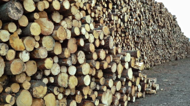 timber industry deforestation log pile - log stock videos & royalty-free footage