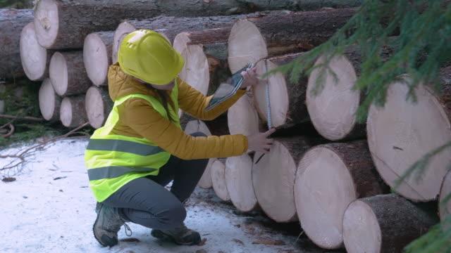 vídeos y material grabado en eventos de stock de industria maderera. ingenieros que miden y calculan el volumen del registro. organizar los problemas de transporte. tomar medidas para la reforestación de los bosques. - leñador