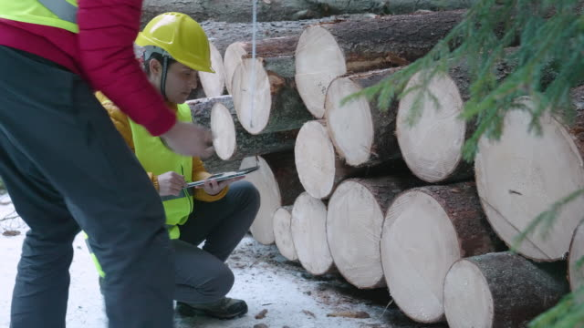 stockvideo's en b-roll-footage met houtindustrie. ingenieurs die het logvolume meten en berekenen. het organiseren van de vervoersvraagstukken. maatregelen nemen voor de herbebossing van de bossen. - organisatie
