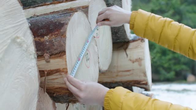 vídeos y material grabado en eventos de stock de industria maderera. ingenieros que miden y calculan el volumen del registro. organizar los problemas de transporte. tomar medidas para la reforestación de los bosques. - madera material de construcción