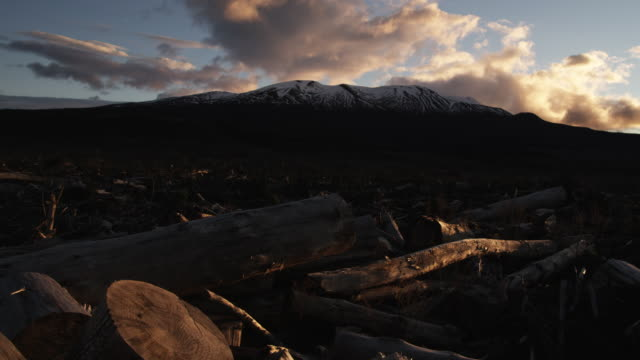 timber lies on the ground from a recent deforestation in the tongariro national park, north island, new zealand. - tongariro national park stock videos & royalty-free footage