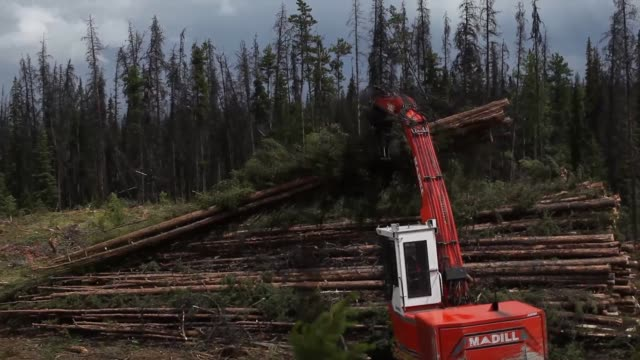 timber logging facility logging machines pile harvested trees logs sorted and cut at a sawmill wood planks wood chips sawdust west fraser timber co... - sawdust stock videos and b-roll footage
