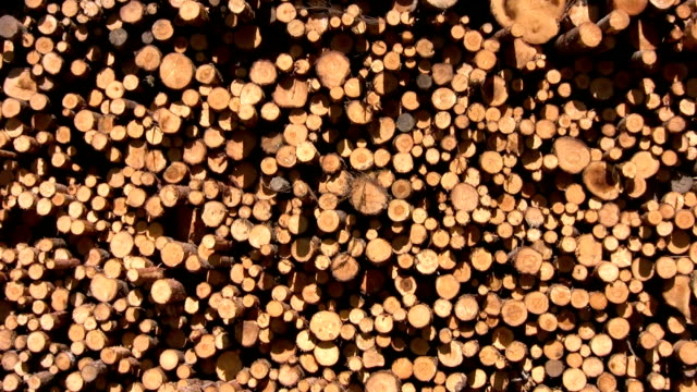 timber stack - pulp stock videos & royalty-free footage
