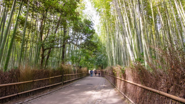 Time Lapse : Bamboo forest in Arashiyama, Kyoto , Japan
