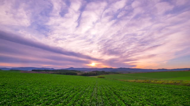 hd time lapse : biei hill landscape sunset,biei, hokkaido, japan - scena rurale video stock e b–roll