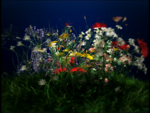 vídeos y material grabado en eventos de stock de cgi time lapse bunch of multi-colored flowers growing out of grass, blooming + spinning around - animación digital