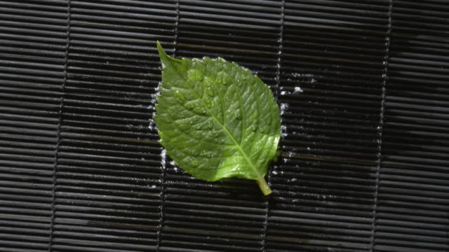 Time lapse close up brown leaf changing color to green and freezing in ice (reverse T/L of frozen leaf melting) / London