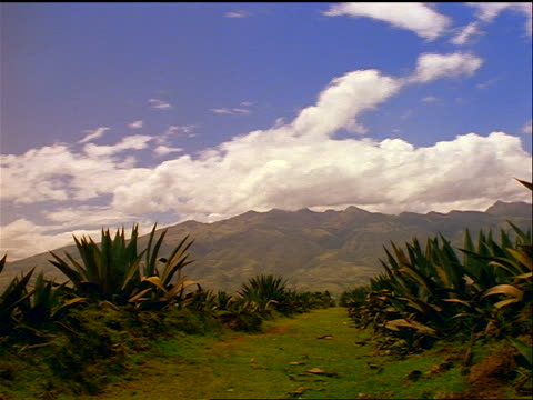 time lapse clouds + cloud shadows over cactus-covered green hill / mountains in background / Otavalo, Ecuador