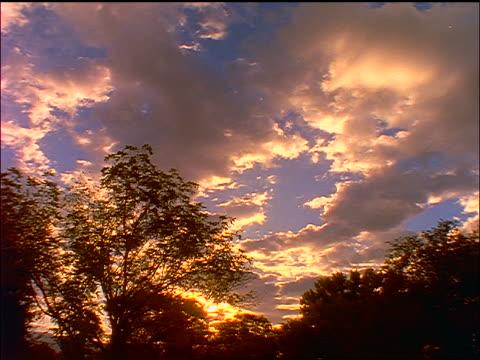 vídeos de stock, filmes e b-roll de time lapse clouds moving in sunset sky / treetops in foreground - céu romântico