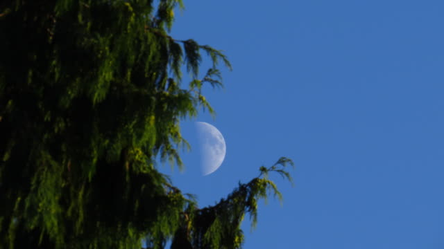 time lapse daytime shot half moon passes behind tree in forground - half moon stock videos & royalty-free footage