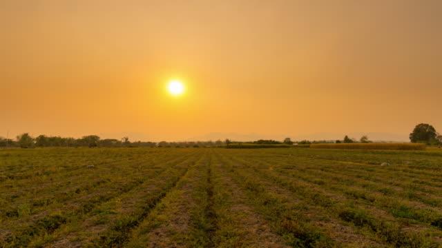 4K Zeitraffer: Feld Morgen und Sonnenaufgang