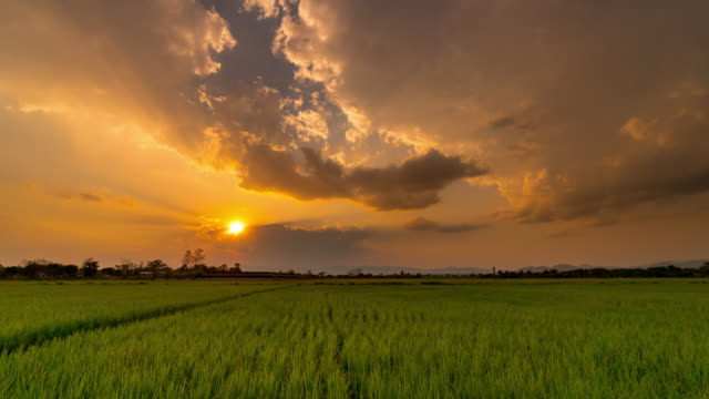 4k time lapse : field in morning and sunrise - rice plant stock videos and b-roll footage