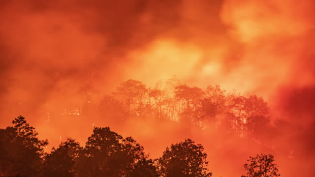 time lapse fire forest wildfire at night - ash stock videos & royalty-free footage