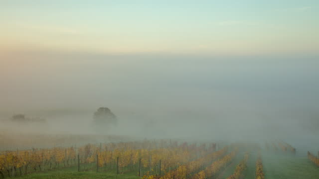 ws time lapse fog lifting over tranquil,idyllic autumn vineyard,jeruzalem,slovenia - retrieving stock videos & royalty-free footage