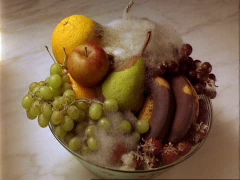 vidéos et rushes de cu time lapse fruit rots in a bowl - coupe à fruits