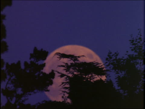 vidéos et rushes de time lapse full moon rising with silhouette of trees in foreground - cinématographie